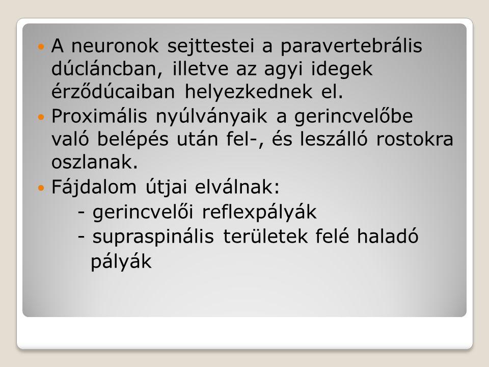 A neuronok sejttestei a paravertebrális dúcláncban, illetve az agyi idegek érződúcaiban helyezkednek el.