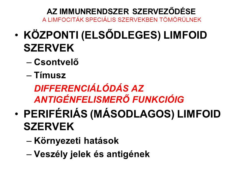KÖZPONTI (ELSŐDLEGES) LIMFOID SZERVEK