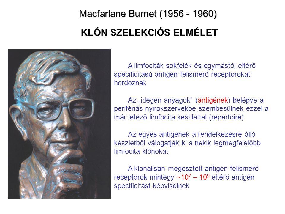 Macfarlane Burnet (1956 - 1960) KLÓN SZELEKCIÓS ELMÉLET