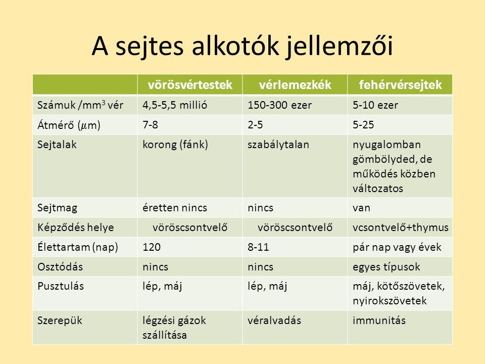 A sejtes alkotók jellemzői