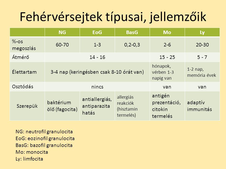 Fehérvérsejtek típusai, jellemzőik