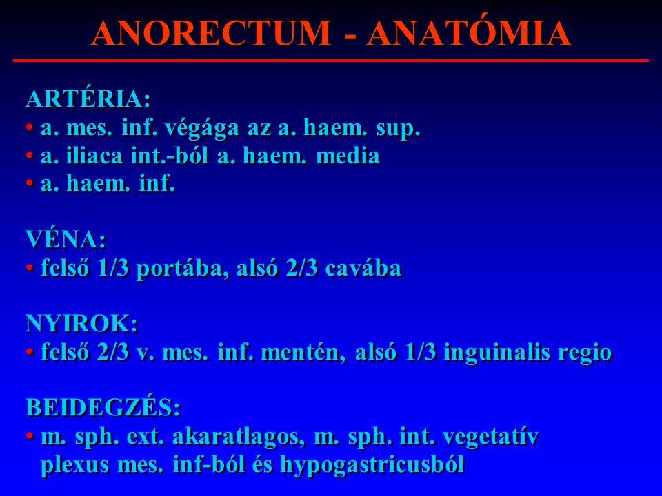 ANORECTUM - ANATÓMIA ARTÉRIA: a. mes. inf. végága az a. haem. sup.
