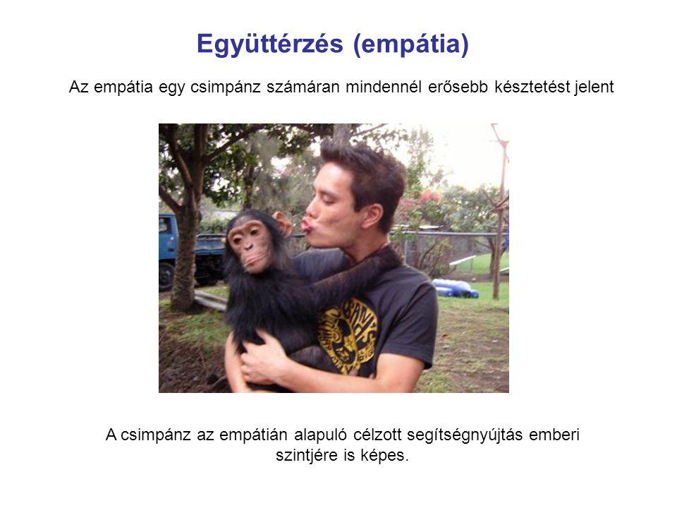 Az empátia egy csimpánz számáran mindennél erősebb késztetést jelent