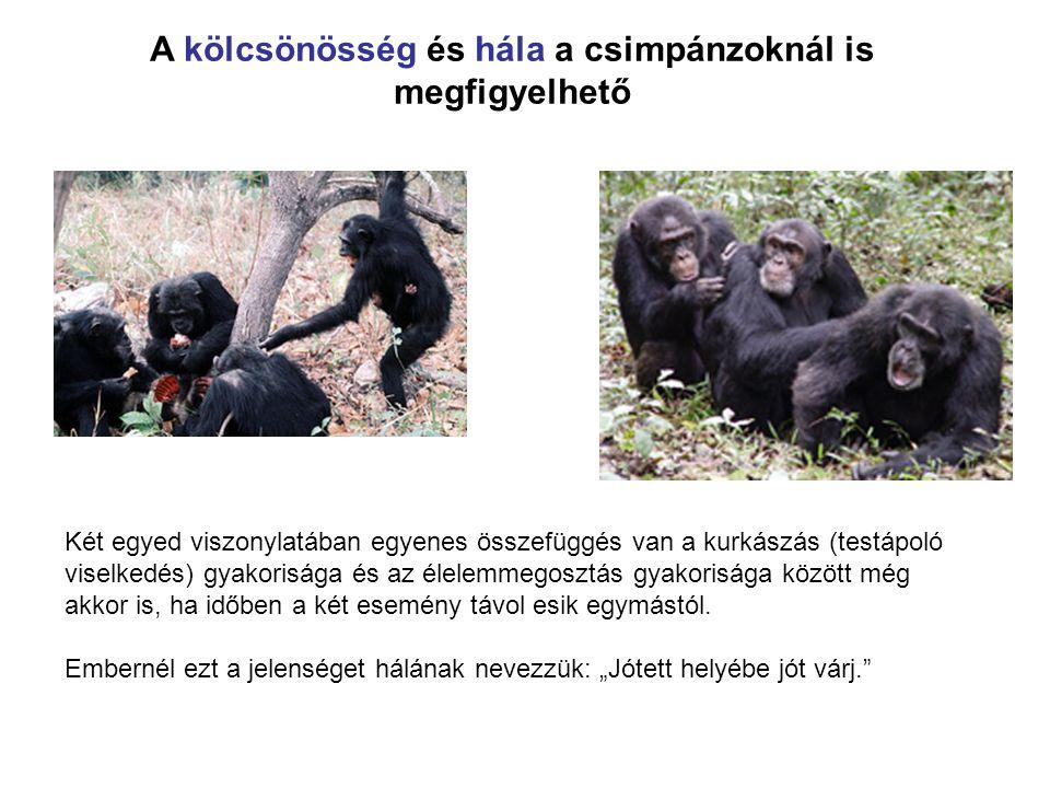 A kölcsönösség és hála a csimpánzoknál is megfigyelhető