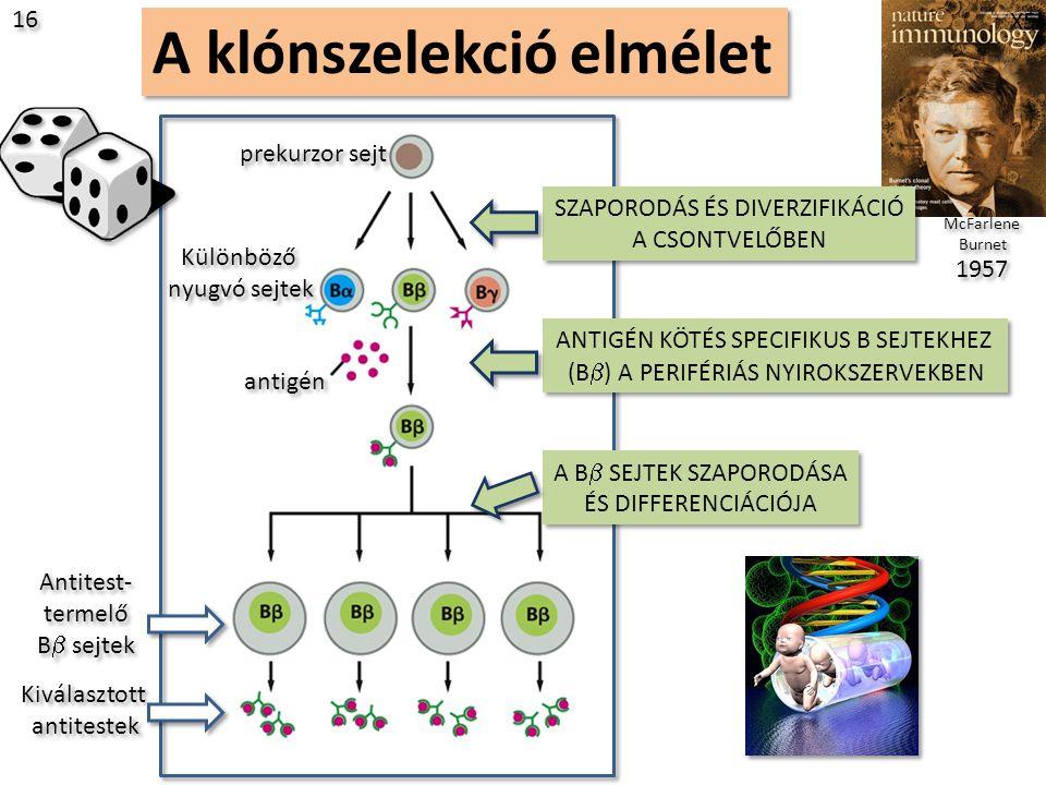 A klónszelekció elmélet