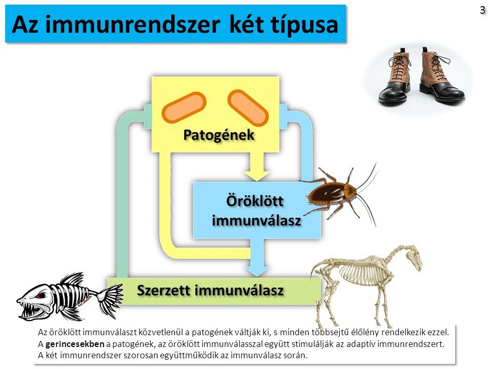 Az immunrendszer két típusa