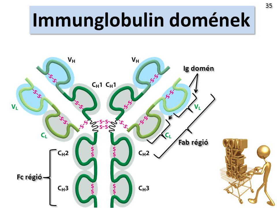 Immunglobulin domének