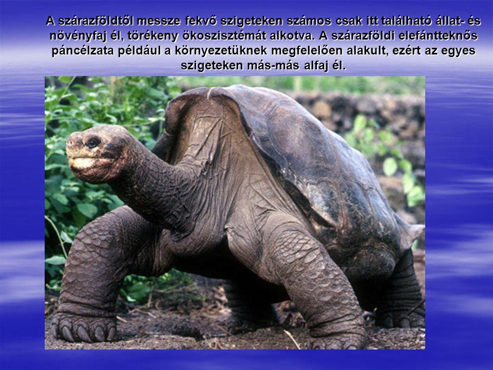 A szárazföldtől messze fekvő szigeteken számos csak itt található állat- és növényfaj él, törékeny ökoszisztémát alkotva.