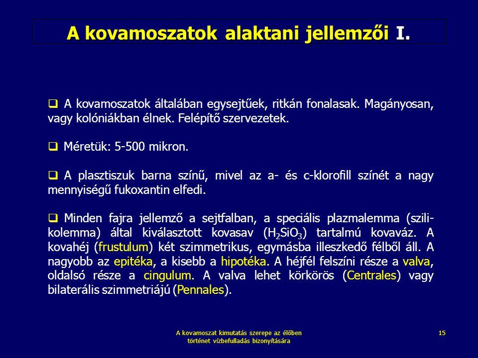 A kovamoszatok alaktani jellemzői I.