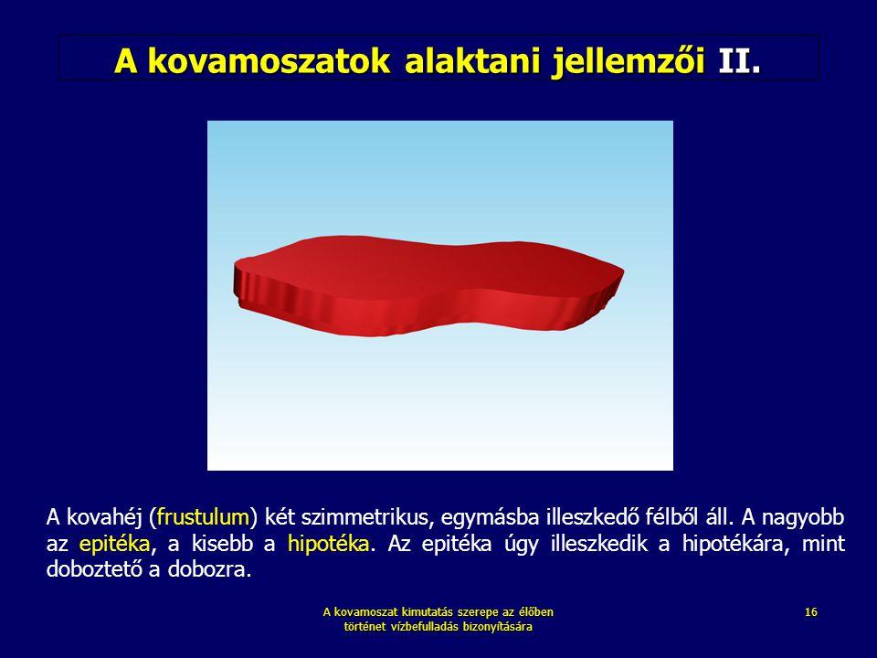 A kovamoszatok alaktani jellemzői II.