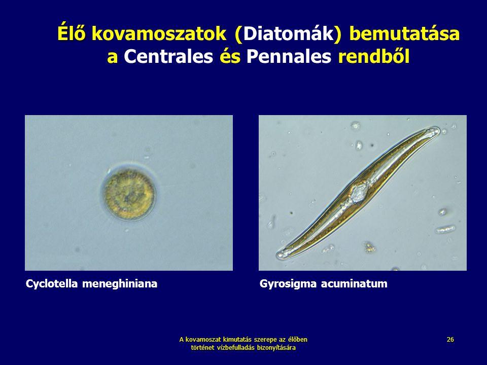 Élő kovamoszatok (Diatomák) bemutatása a Centrales és Pennales rendből