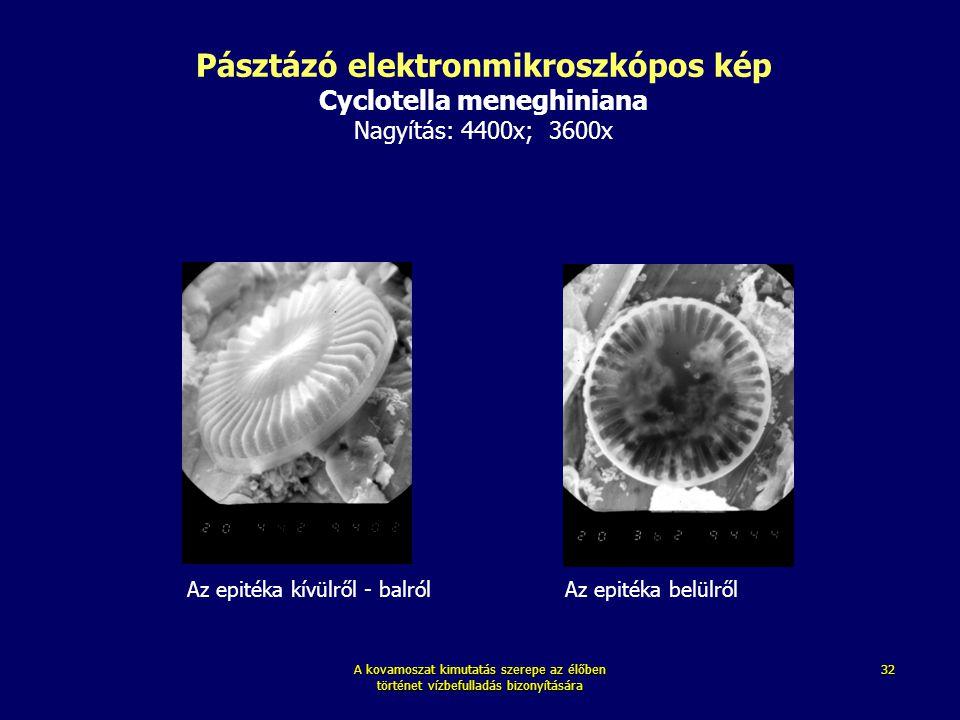 Pásztázó elektronmikroszkópos kép Cyclotella meneghiniana