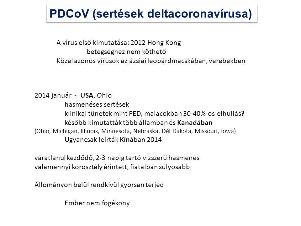 PDCoV (sertések deltacoronavírusa)
