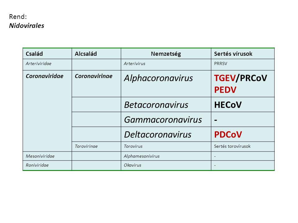 Alphacoronavirus TGEV/PRCoV PEDV Betacoronavirus HECoV