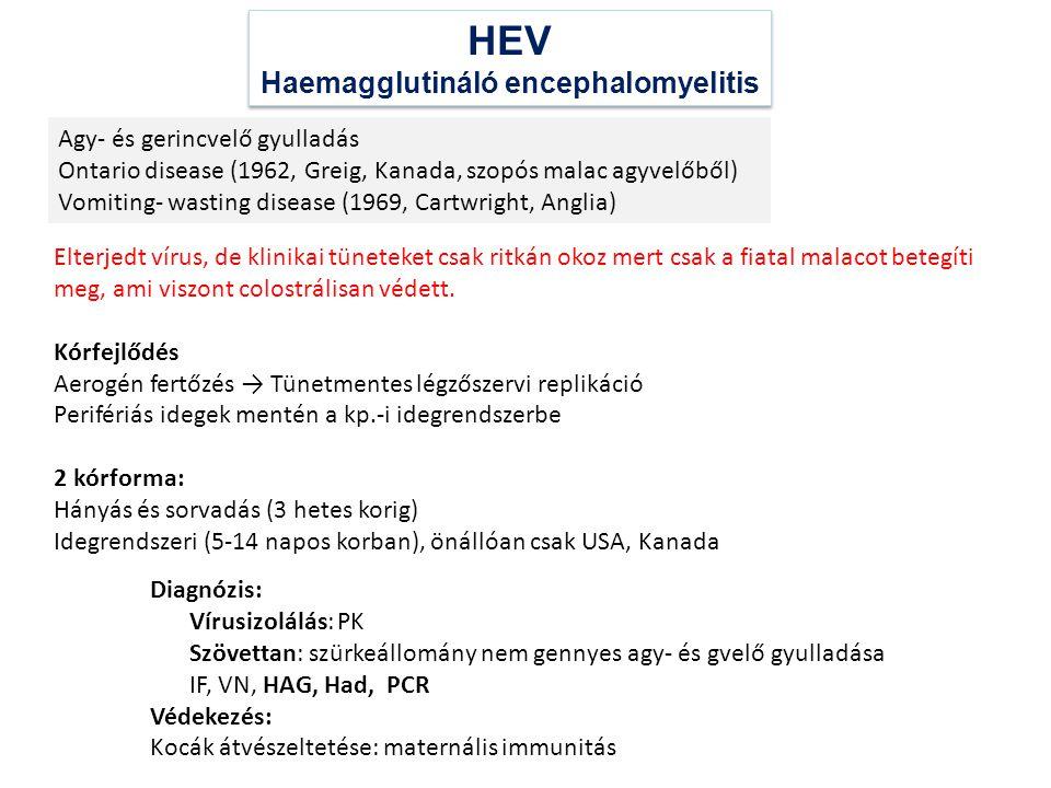 Haemagglutináló encephalomyelitis