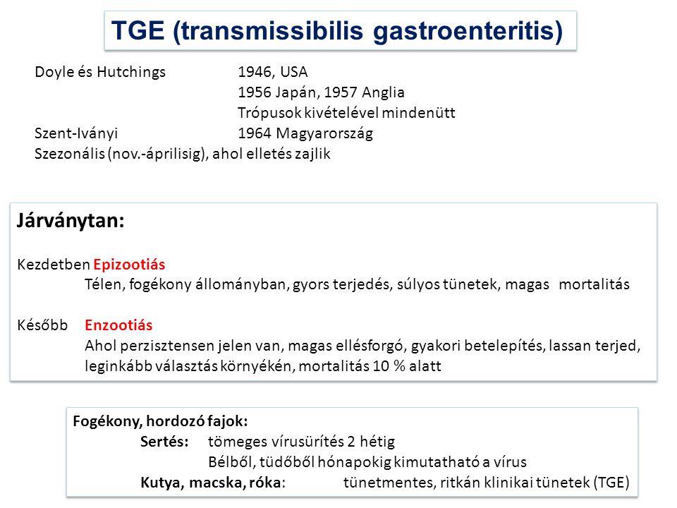 TGE (transmissibilis gastroenteritis)