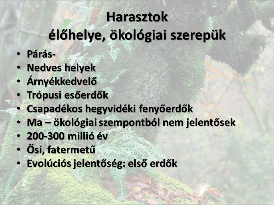 Harasztok élőhelye, ökológiai szerepük