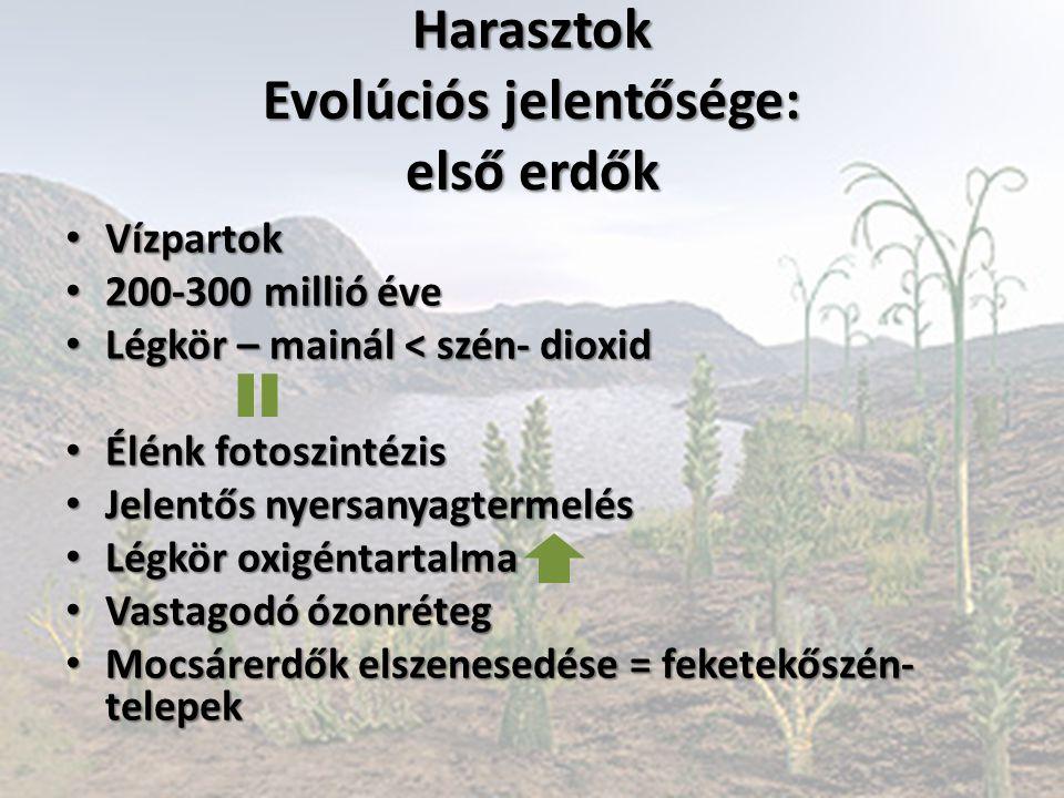 Harasztok Evolúciós jelentősége: első erdők