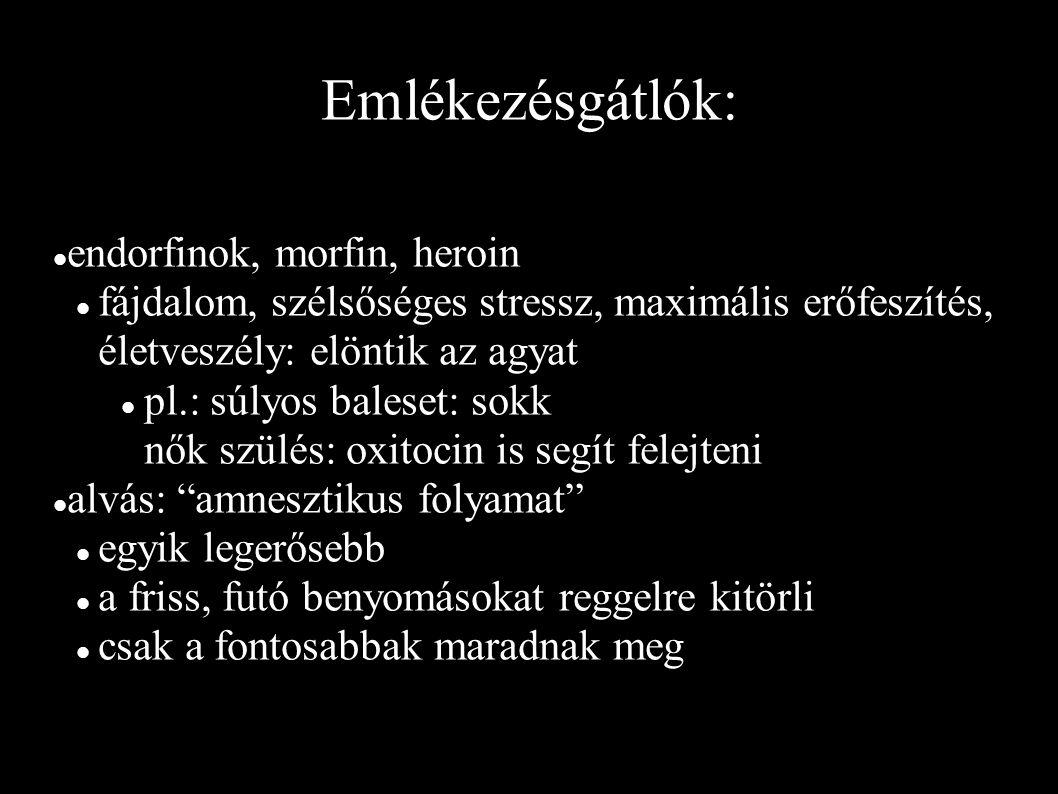 Emlékezésgátlók: endorfinok, morfin, heroin