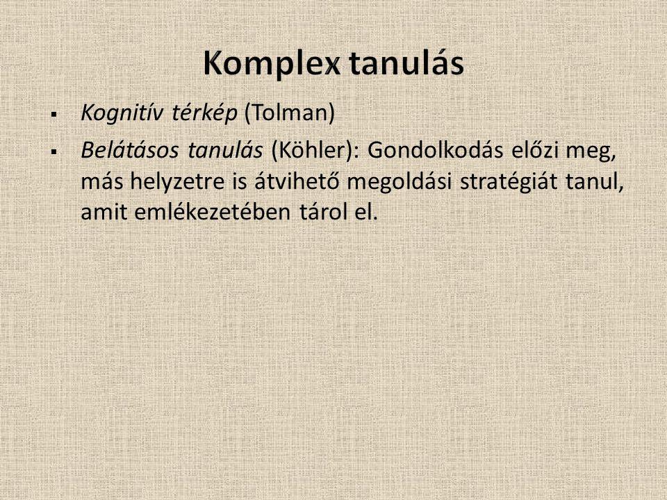 Komplex tanulás Kognitív térkép (Tolman)