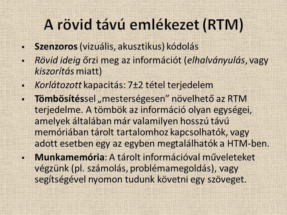 A rövid távú emlékezet (RTM)