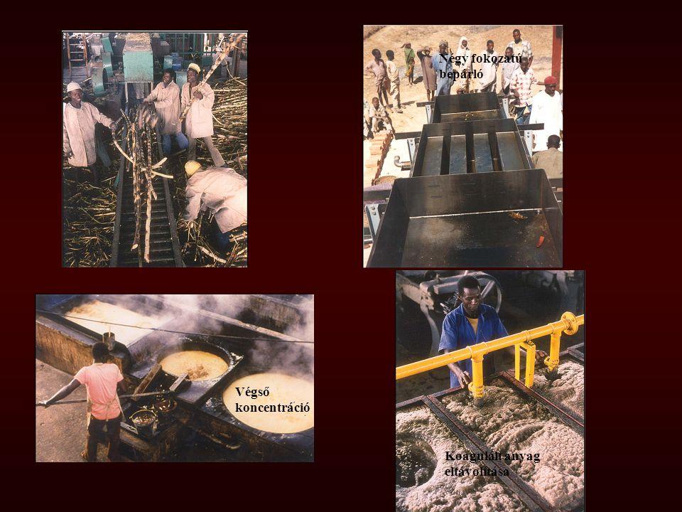 Négy fokozatú bepárló Végső koncentráció Koagulált anyag eltávolítása