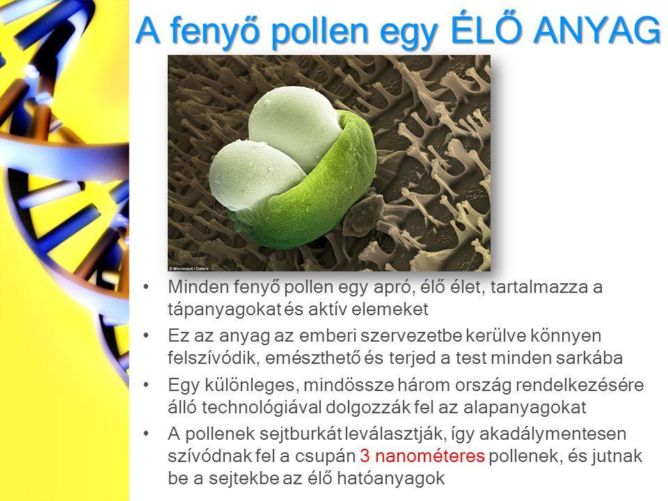 A fenyő pollen egy ÉLŐ ANYAG