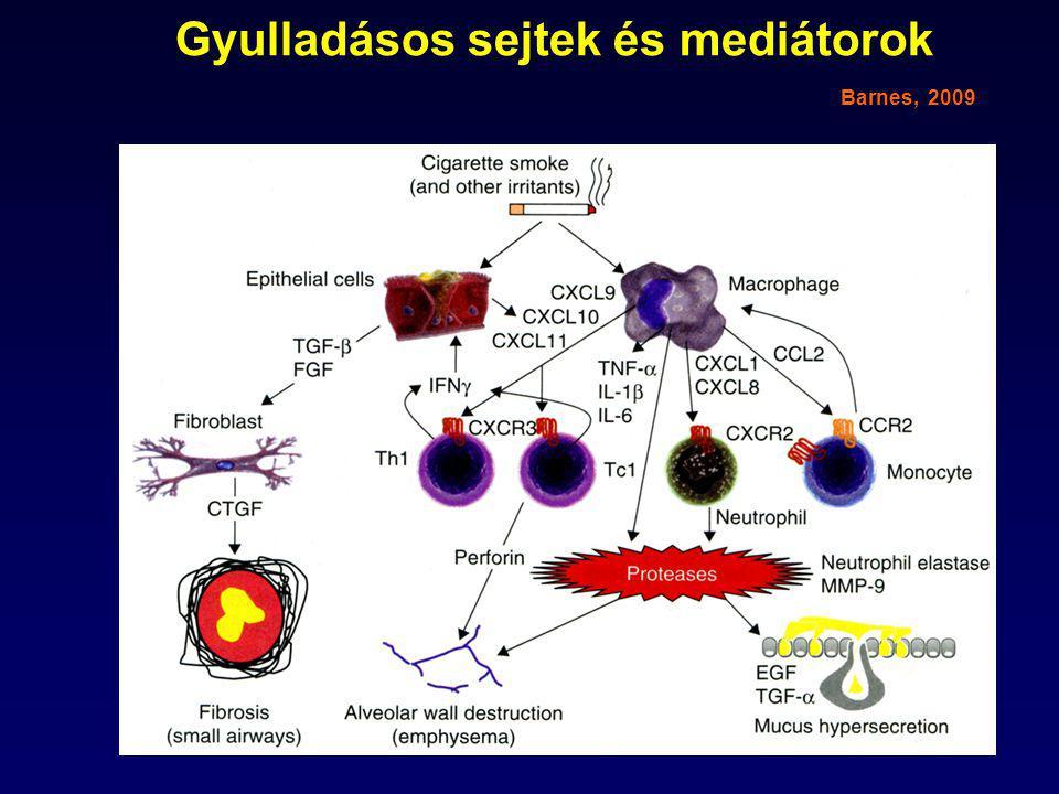 Gyulladásos sejtek és mediátorok