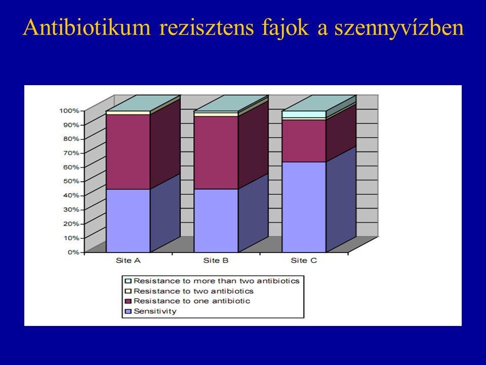 Antibiotikum rezisztens fajok a szennyvízben