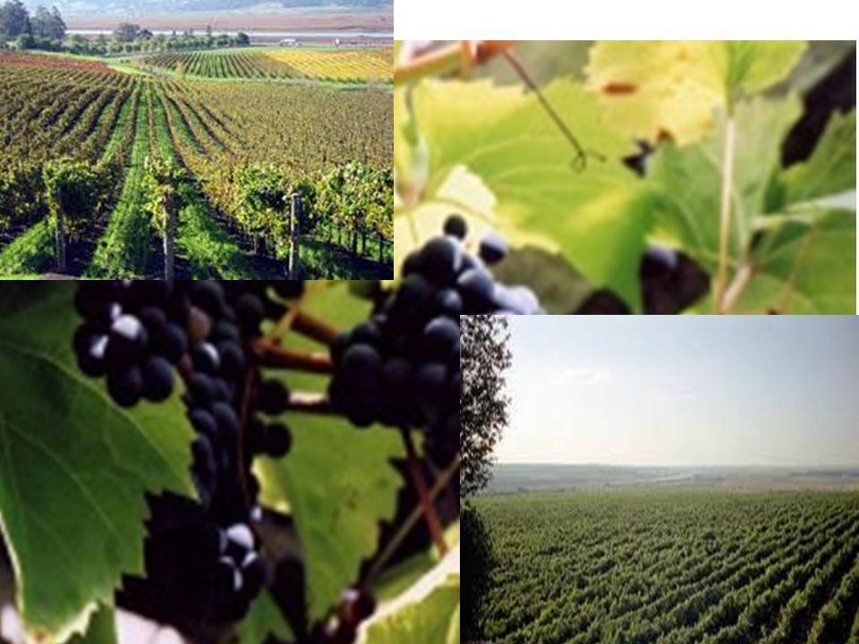 www.borászportál.hu