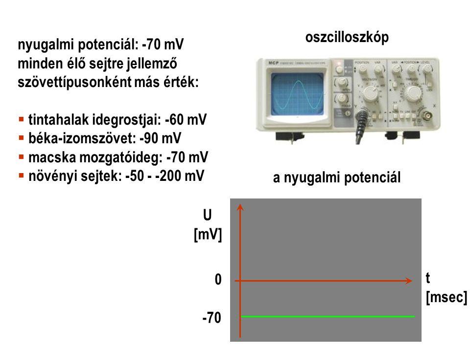 oszcilloszkóp nyugalmi potenciál: -70 mV. minden élő sejtre jellemző. szövettípusonként más érték: