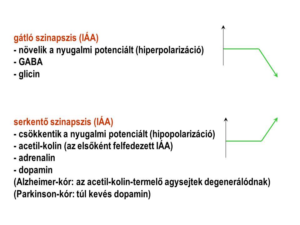 gátló szinapszis (IÁA)