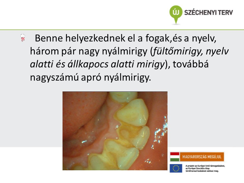 Benne helyezkednek el a fogak,és a nyelv, három pár nagy nyálmirigy (fültőmirigy, nyelv alatti és állkapocs alatti mirigy), továbbá nagyszámú apró nyálmirigy.