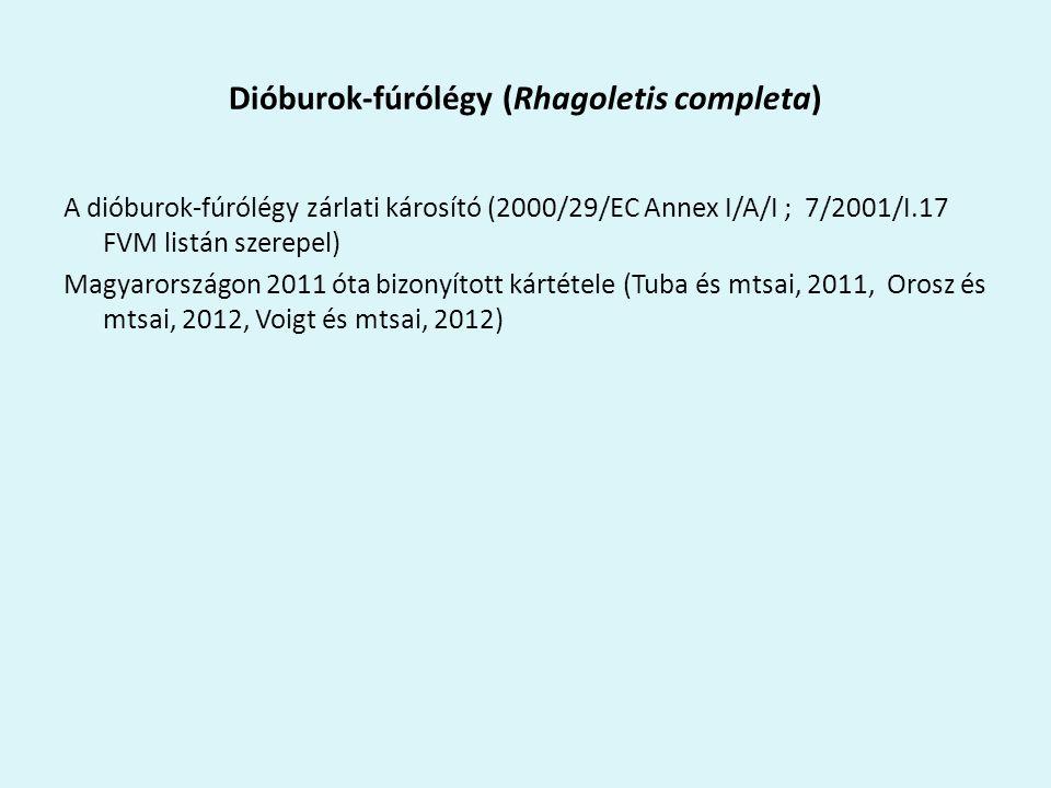 Dióburok-fúrólégy (Rhagoletis completa)