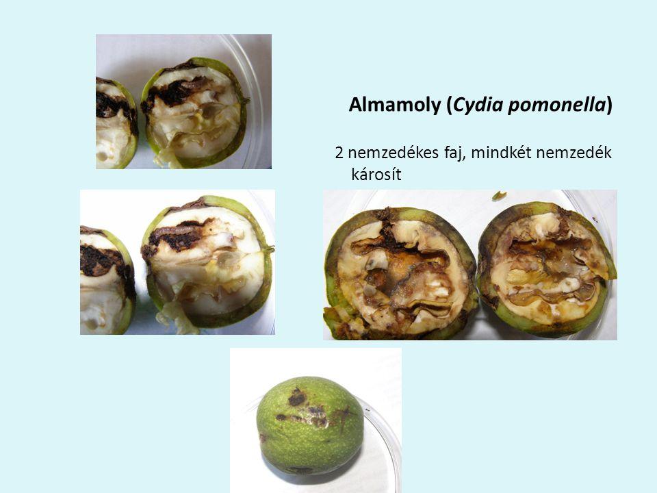 Almamoly (Cydia pomonella)
