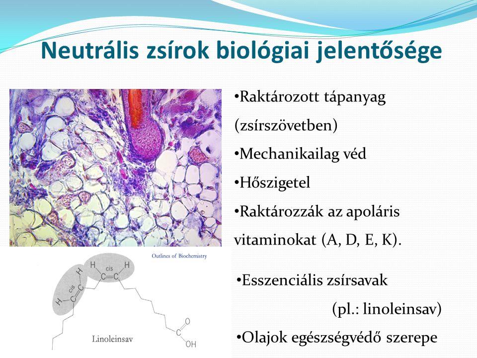 Neutrális zsírok biológiai jelentősége