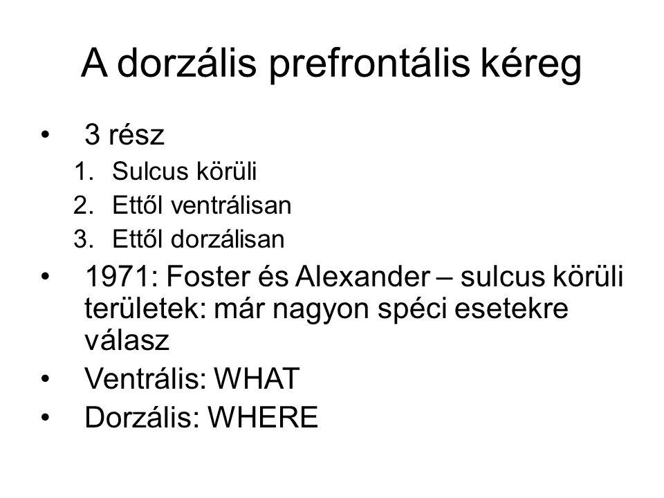 A dorzális prefrontális kéreg