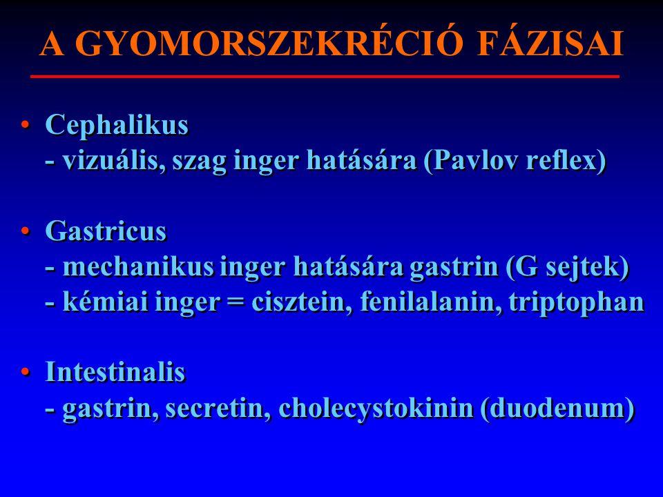A GYOMORSZEKRÉCIÓ FÁZISAI