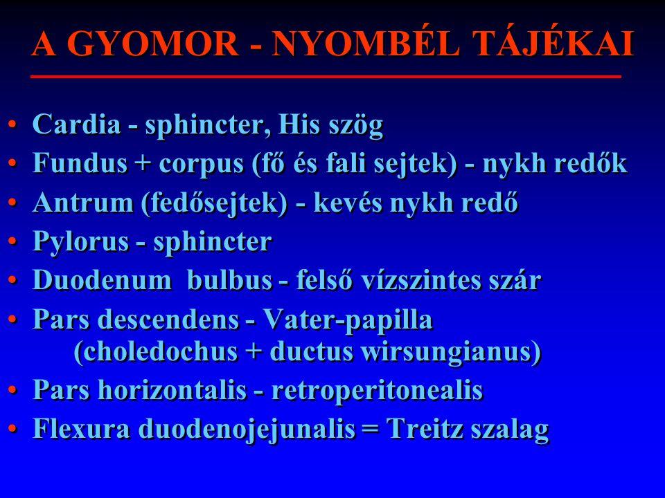 A GYOMOR - NYOMBÉL TÁJÉKAI