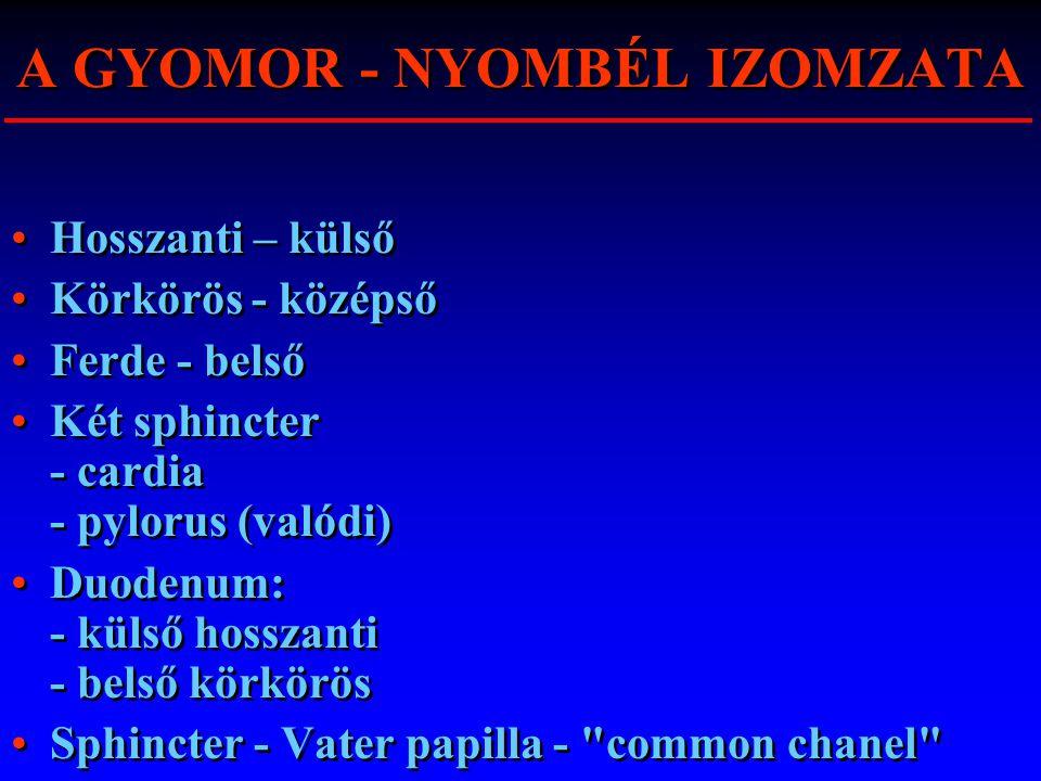 A GYOMOR - NYOMBÉL IZOMZATA