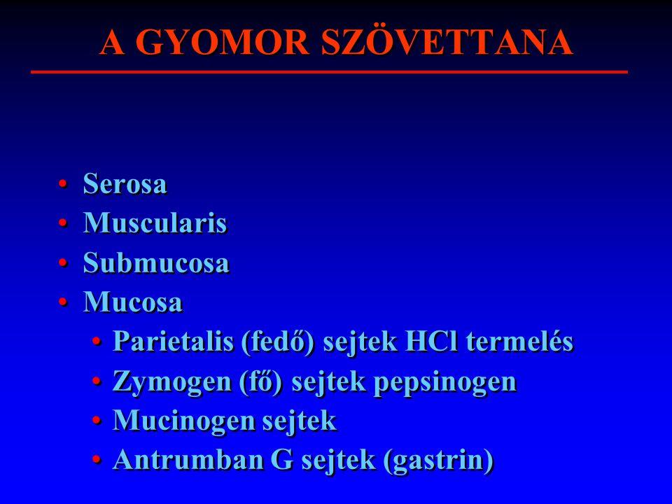A GYOMOR SZÖVETTANA Serosa Muscularis Submucosa Mucosa