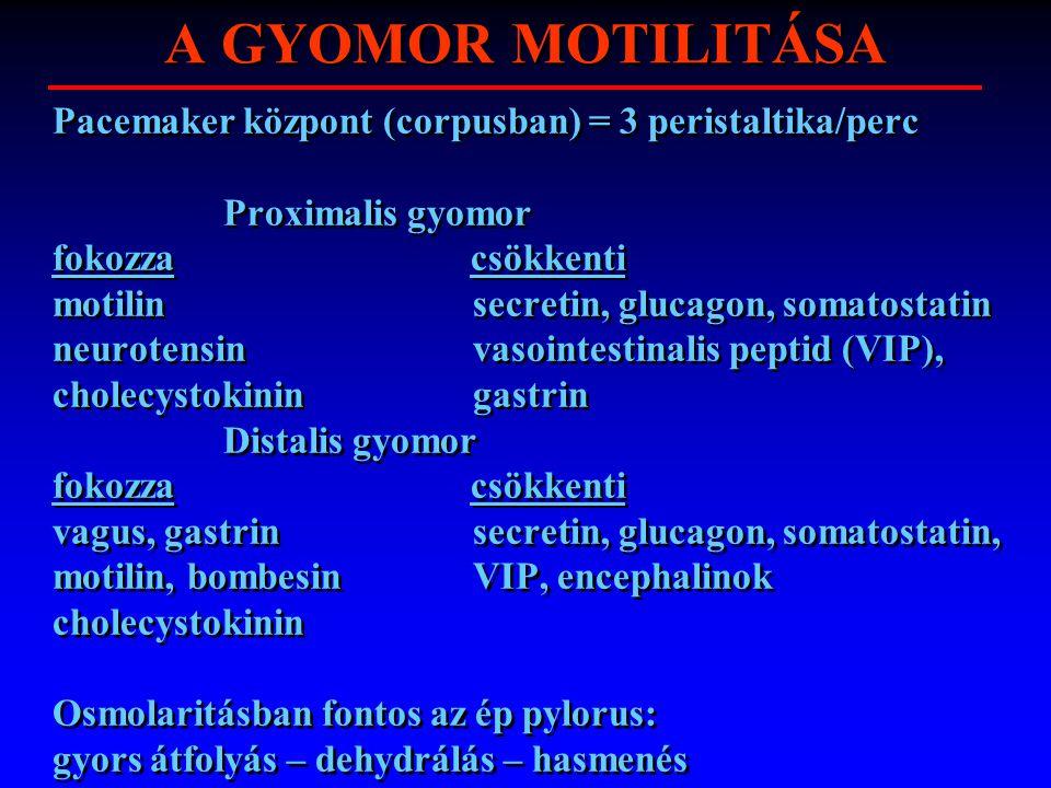 A GYOMOR MOTILITÁSA Pacemaker központ (corpusban) = 3 peristaltika/perc. Proximalis gyomor. fokozza csökkenti.