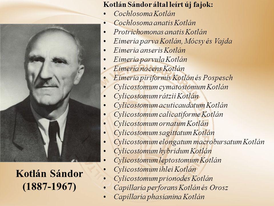 Kotlán Sándor (1887-1967) Kotlán Sándor által leírt új fajok: