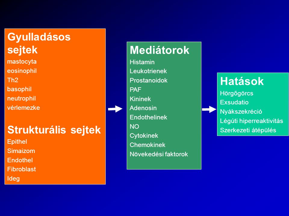 Mediátorok Hatások Gyulladásos sejtek Strukturális sejtek mastocyta
