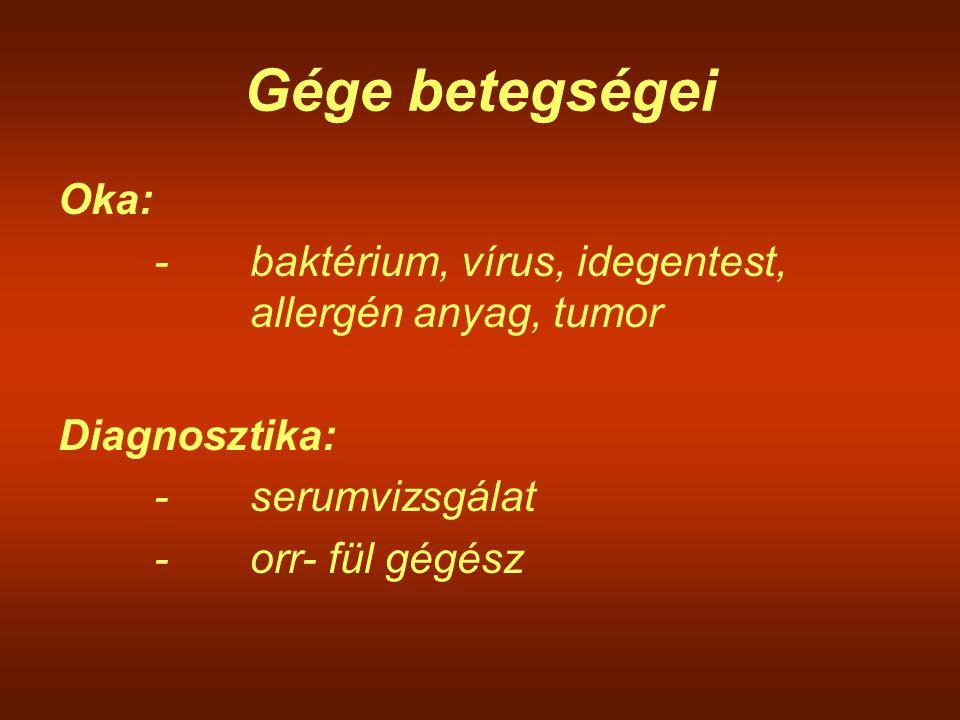 Gége betegségei Oka: - baktérium, vírus, idegentest, allergén anyag, tumor. Diagnosztika: - serumvizsgálat.