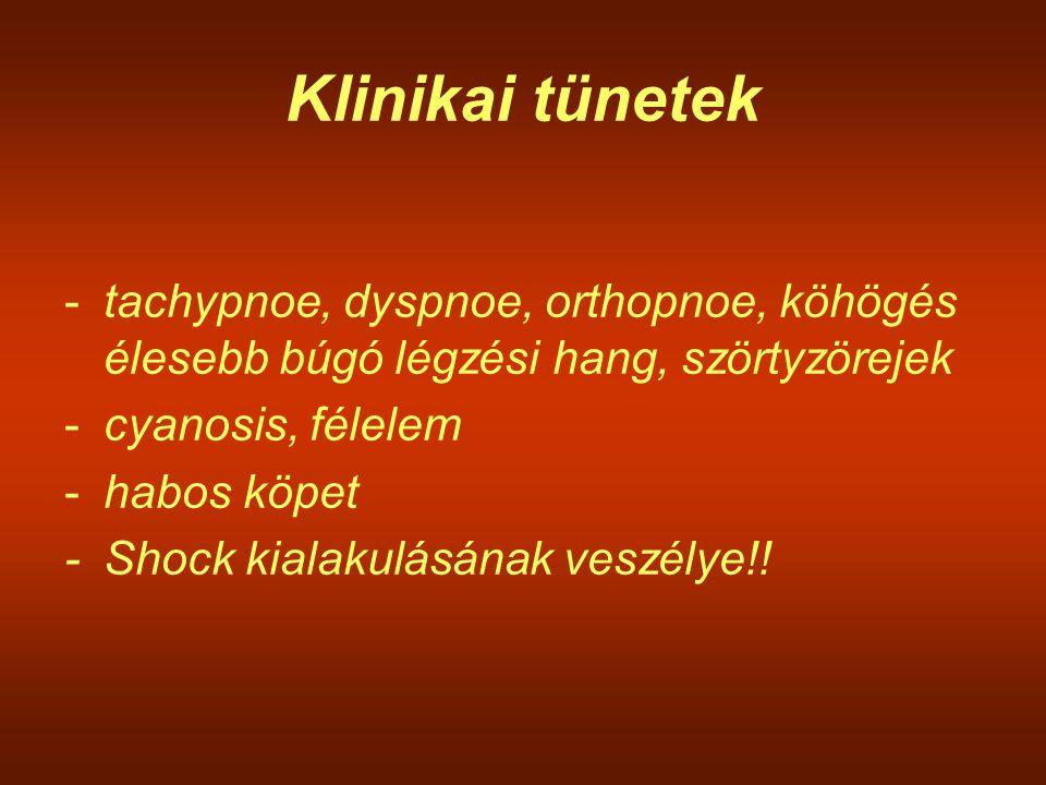 Klinikai tünetek tachypnoe, dyspnoe, orthopnoe, köhögés élesebb búgó légzési hang, szörtyzörejek. cyanosis, félelem.