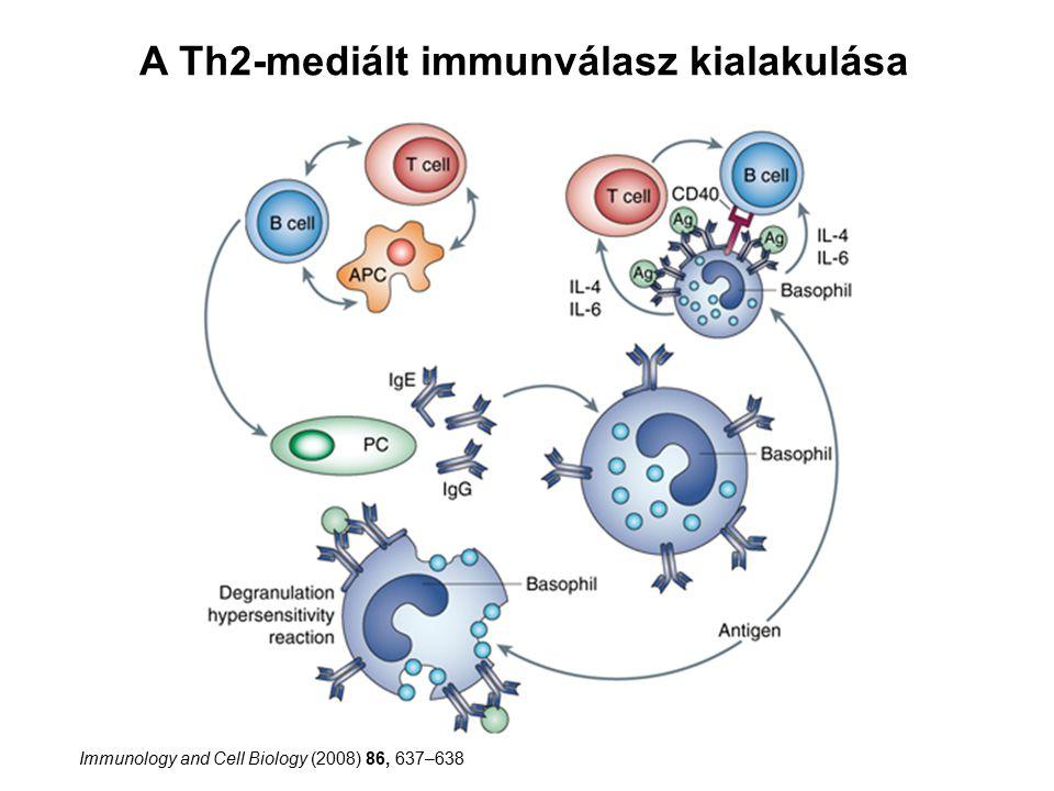 A Th2-mediált immunválasz kialakulása