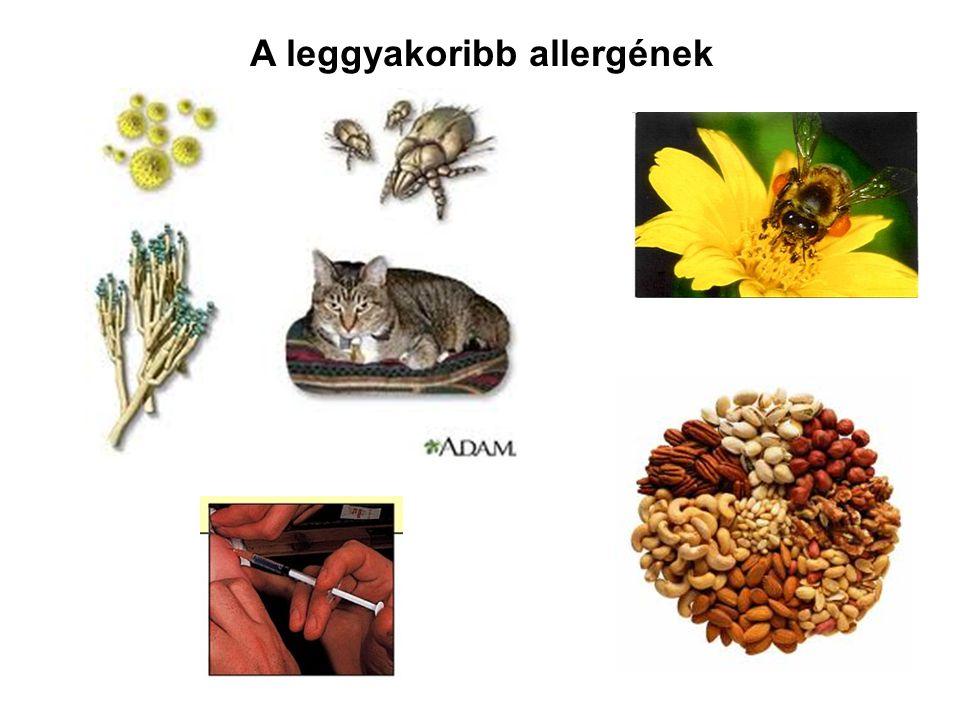 A leggyakoribb allergének