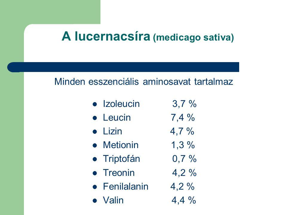 A lucernacsíra (medicago sativa)