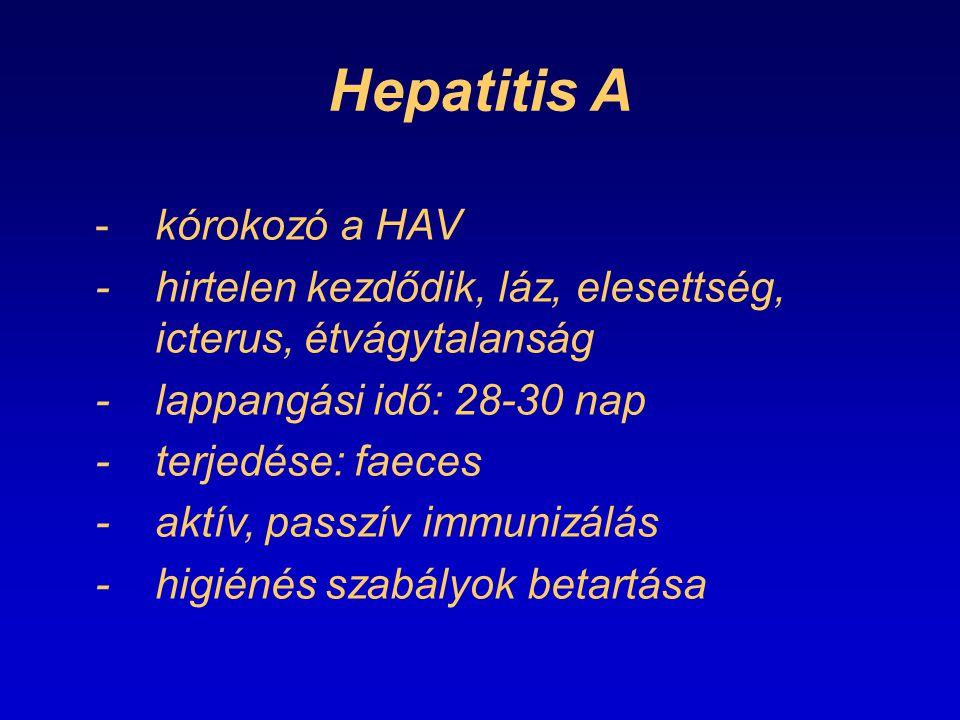Hepatitis A - kórokozó a HAV